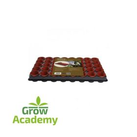 W50 PROFESSIONAL SEED AND CUTTING TRAY (40 X 6CM P