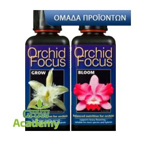 Orchid Focus Bloom