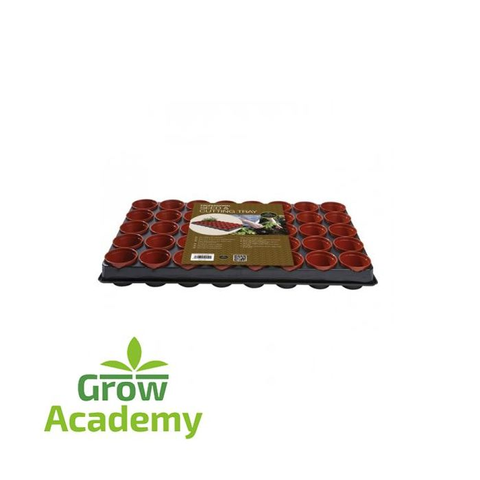 W50 Professional Seed And Cutting Tray (40x6 cm P